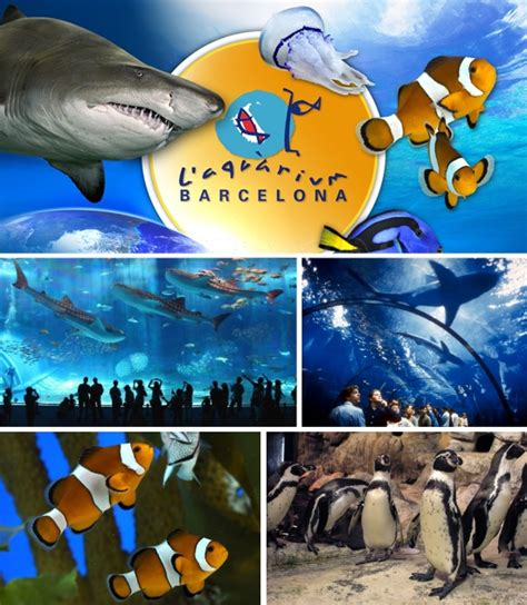 aquarium barcelone tarif prix de luaquarium with aquarium barcelone tarif things to do in