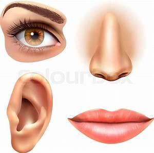 Human Face Parts 4 Sense Organs Icons