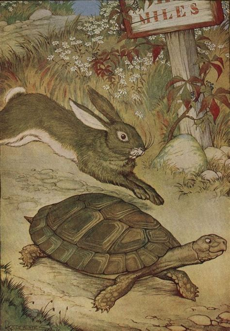 de haas en de schildpad wikipedia