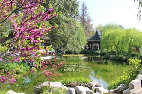 huntington library and botanical gardens 中国园林流芳园景色 picture of the huntington library
