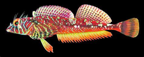fish species living   salish sea increases