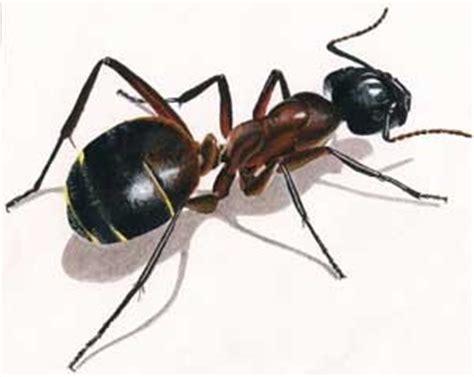 rever de maison islam r 234 ver de fourmi en islam