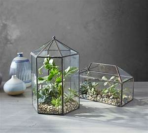 Glass Terrarium Pottery Barn