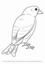 Goldfinch Draw American Step Drawing Birds Drawingtutorials101 Previous sketch template