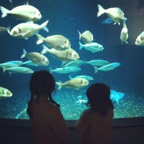 quot fabriques des profondeurs quot 224 l aquarium de la reine de l iode