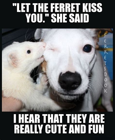 Ferret Memes - ferrets ferrets pinterest awesome for kids and kid