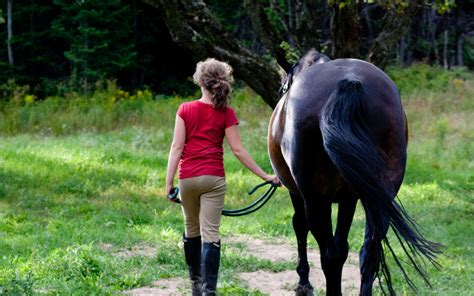 human horse relationship within important consistency equine website