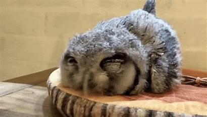 Owls Down Sleeping Sleep Sleepy Faces Owl
