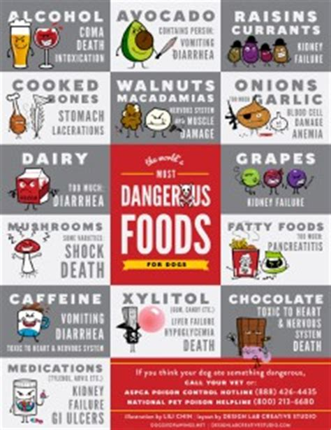 toxic foods  dogs cats pet health article texvetpets
