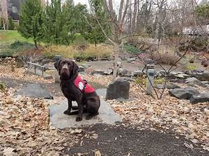 12 year old girl in north bend oregon recieves seizure response dog from service dogs by warren retrievers