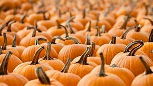 Pumpkin, Patch, U2013, Bing, Wallpaper, Download