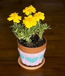 Heart, Flower, Pot, Cozy
