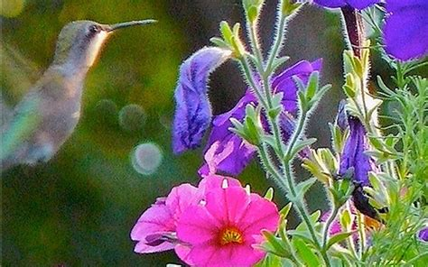 hanging baskets for hummingbirds pin by pam ellen on helpful ideas pinterest