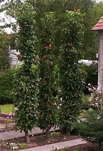 Spalierobst Als Sichtschutz : s ulenobst im garten s ulenobst pinterest g rten gartenideen und pflanzen ~ Orissabook.com Haus und Dekorationen