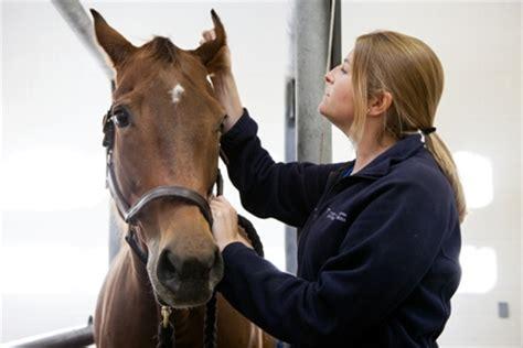 uf researchers rare human parasite    horse