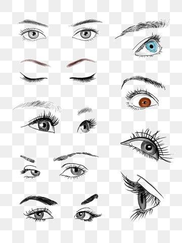 eyebrow png vector psd  clipart  transparent