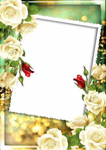 Frame Floral Rose Frames Selected