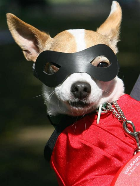 Halloween Costume Ideas For Dogs And Cats Diy