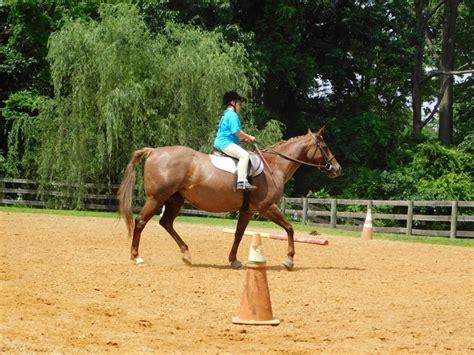 diagonal correct riding posting horse breeds barrel trot racing tricks tips horses diagonals draft learning pethelpful