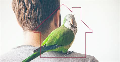 The Best Types Of Homes For Different Species Of Pet Birds