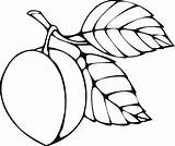 Coloring Food Pages Peach Rocks sketch template