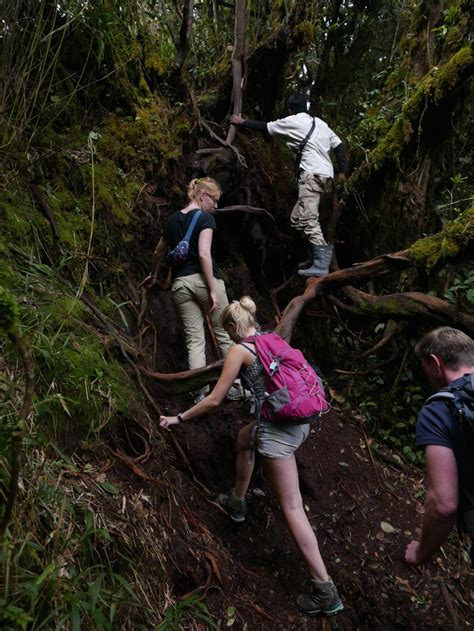 Hill Top Travel And Tour Mossy Forest Cameron Highlands