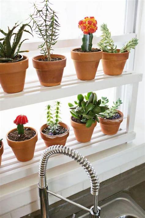 décorez avec les plantes grasses d 39 intérieur