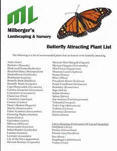 Plantanswers, Plant, Answers, U0026gt, Butterfly, Garden