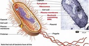 Senthil Prabhu Sivasamy  Cell Biology I