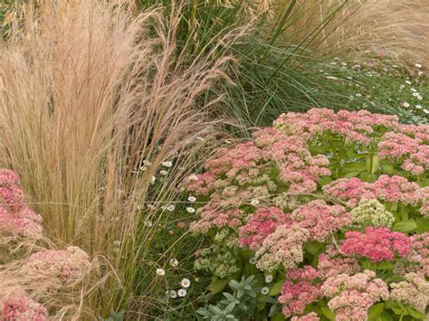 great garden plants great plant combinations traditional landscape