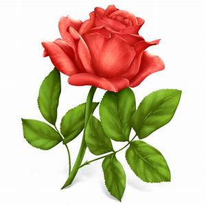 Rose Plant Flower / Gifts / 128px / Icon Gallery