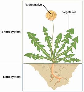 The Plant Body · Biology