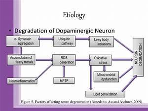 Parkinson Disease Pathophysiology Diagram