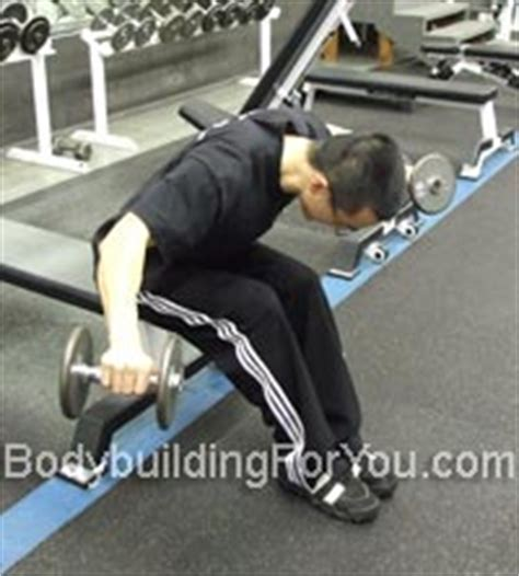 Pec Deck Flyes Target Muscles by Rear Deltoid Exercises Bent Dumbbell Raise And