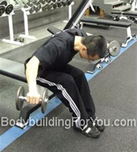 rear pec deck flye rear deltoid exercises bent dumbbell raise and
