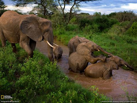 Beautiful African Animals Safaris