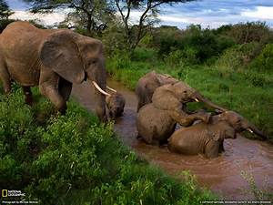 Beautiful African Animals Safaris: Wildlife of Africa ...