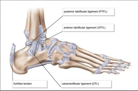 si e lcl stress tests for ankle ligaments physiopedia