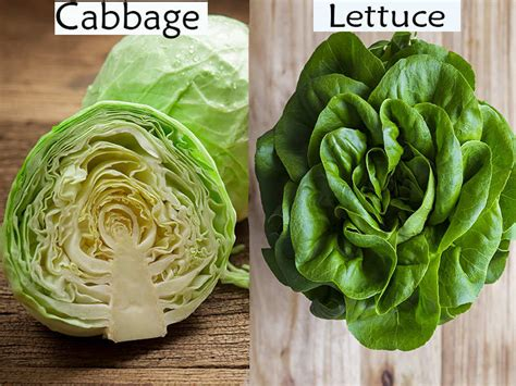 cabbage lettuce whats  difference