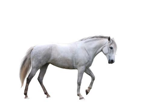 image  horse   clip art  clip art