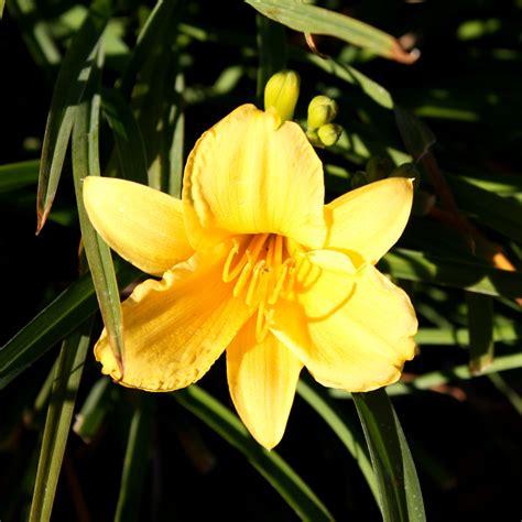 Yellow Flower Picture | Free Photograph | Photos Public Domain