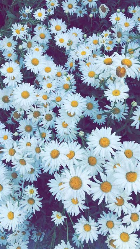 top 25 best flower wallpaper ideas on flower