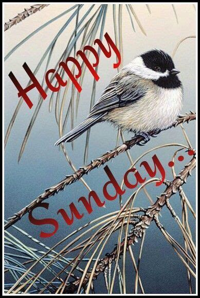 perched bird sunday quote pictures   images