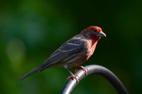 birds of alabama a continuing study of nature as art