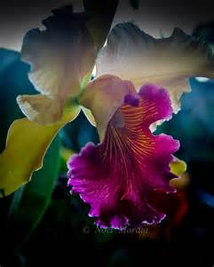 Rare Exotic Flowers Orchids