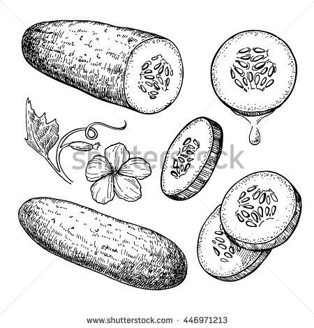 cucumber slice clipart black and white cucumber stock images royalty free images vectors