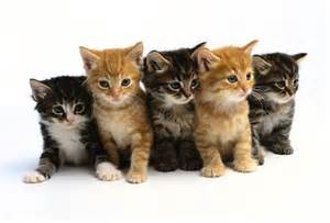 for cats free free cat freebie depot