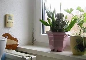 silikonfuge schimmelig bohrung im fensterrahmen fur With markise balkon mit mittel gegen schimmel tapete