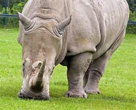 Endangered Animals Wildlife