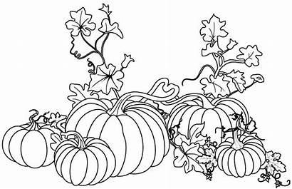 Pumpkin Coloring Vines Vine Pages Drawing Autumn